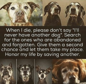 "Life, Memes, and Search: When I die, please don't say ""I'II  never have another dog"". Search  for the ones who are abandoned  and forgotten. Give them a second  chance and let them take my place  Honor my life by saving another. Hear, hear!"