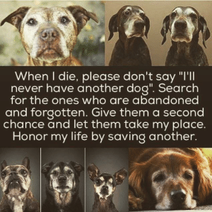 "Life, Search, and Never: When I die, please don't say ""I'll  never have another dog"". Search  for the ones who are abandoned  and forgotten. Give them a second  chance and let them take my place.  Honor my life by saving another. Gone But Never Forgotten via /r/wholesomememes https://ift.tt/2KwySpt"