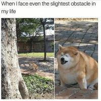 Funny, Life, and Lol: When I face even the slightest obstacle in  my life Haha lol