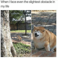 Doge, Life, and MeIRL: When I face even the slightest obstacle in  my life Get out ma way, obstacles. #Shiba #Doge #Life #LiterallySame #MeIRL
