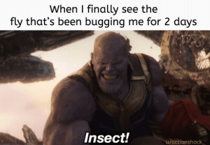 Reddit, Been, and Format: When I finally see the  fly that's been bugging me for 2 days  Insect!  u/actionshock Underrated format
