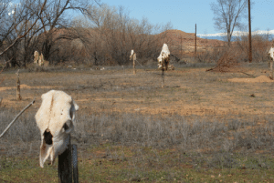 """""""When I first saw this in Oct 2010 my gut feeling was that I immediately wanted to leave but it was already to late I knew right then I was trespassing on hollowed land & we had NO business there. #skinwalkerranch #truth what did I get myself into,how will this effect my family,"""" says Chris Bartel.: """"When I first saw this in Oct 2010 my gut feeling was that I immediately wanted to leave but it was already to late I knew right then I was trespassing on hollowed land & we had NO business there. #skinwalkerranch #truth what did I get myself into,how will this effect my family,"""" says Chris Bartel."""