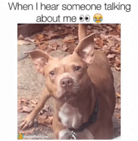 Memes, Prank, and 🤖: When I hear someone talking  about me  ownage Pranks.com What'd you say?!