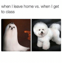 Memes, Home, and Today: when I leave home vs. when I get  to class is it humid today? it feels a bit humid. follows appreciated @chaos.reigns_