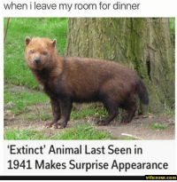 28+ Funny Memes Of Today's - #funnymemes #funnypictures #humor #funnytexts #funnyquotes #funnyanimals #funny #lol #haha #memes #entertainment #vifunow.com: when i leave my room for dinner  theworldpolice  Extinct' Animal Last Seen in  1941 Makes Surprise Appearance  vifunow.comm 28+ Funny Memes Of Today's - #funnymemes #funnypictures #humor #funnytexts #funnyquotes #funnyanimals #funny #lol #haha #memes #entertainment #vifunow.com
