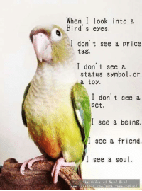 When I look into a birds eyes, I don't see a price tag, I don't see a status symbol, or a toy. I see a being, I see a friend, I see a soul #bird: When I look into a  Bird's eyes.  I don't see a price  tag.  I don't see a  status symbol, or  a toy.  I don't see a  pet.  I see a being.  I see a friend.  I see a soul  The Official Nerd 8 ird When I look into a birds eyes, I don't see a price tag, I don't see a status symbol, or a toy. I see a being, I see a friend, I see a soul #bird