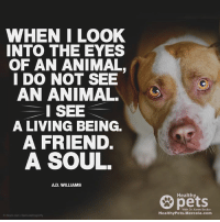 Because they're more than just 4 legged creatures...: WHEN I LOOK  INTO THE EYES  OF AN ANIMAL,  I DO NOT SEE  AN ANIMAL.  I SEE  A LIVING BEING.  A FRIEND.  A SOUL.  D. WILLIAMS  Healthy  With Dr. Karen Becker  Healthy Pets. Mercola.com Because they're more than just 4 legged creatures...