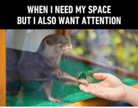 I just need some otter space.  Ridiculous Otter memes ➡️ https://9gag.com/tag/otter?ref=fbpic: WHEN I NEED MY SPACE  BUT I ALSO WANT ATTENTION I just need some otter space.  Ridiculous Otter memes ➡️ https://9gag.com/tag/otter?ref=fbpic