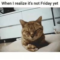 Friday, Memes, and 🤖: When I realize it's not Friday yet