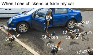 Meirl: When I see chickens outside my car.  Me  Chicken  Chicken  Chicken  Chicken  Chicken  Chicken  Chicken  Chicken  Chicken Meirl