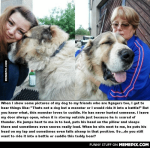"""Looks doesn't matter at allomg-humor.tumblr.com: When I show some pictures of my dog to my friends who are 9gagers too, I get to  hear things like: """"Thats not a dog but a monster or I would ride it into a battle!"""" But  you know what, this monster loves to cuddle. He has never hurted someone. I leave  my door always open, when it is stormy outside just because he is scared of  thunder. He jumps hext to me in to bed, puts his head on the pillow and sleeps  there and sometimes even snores really loud. When he sits next to me, he puts his  head on my lap and sometimes even falls alseep in that position. So...do you still  want to ride it into a battle or cuddle this teddy bear?  FUNNY STUFF ON MEMEPIX.COM  MEMEPIX.COM Looks doesn't matter at allomg-humor.tumblr.com"""