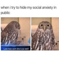 Anxiety, Irl, and Me IRL: when i try to hide my social anxiety in  public  Look how calm she is as well! me irl