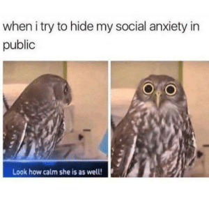 Dank, Memes, and Target: when i try to hide my social anxiety in  public  Look how calm she is as well! me irl by Ganderville MORE MEMES