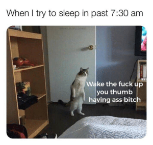 Ass, Bitch, and Memes: When I try to sleep in past 7:30 am  Wake the fuck up  you thumb  having ass bitch