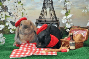 """when I was like around 8 me and my parents went looking around petsathome and we were looking at the rabbits and I read a sign that said """"rabbits live in pairs"""" but my dumbass thought it said """"rabbits live in paris"""" and I was so confused as to what that meant and why my parents were laughing: when I was like around 8 me and my parents went looking around petsathome and we were looking at the rabbits and I read a sign that said """"rabbits live in pairs"""" but my dumbass thought it said """"rabbits live in paris"""" and I was so confused as to what that meant and why my parents were laughing"""