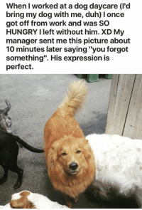 """Animals, Funny, and Funny Animals: When I worked at a dog daycare (I'd  bring my dog with me, duh) I once  got off from work and was SO  HUNGRY I left without him. XD My  manager sent me this picture about  10 minutes later saying """"you forgot  something"""". His expression is  perfect. We forget things all the time and we usually make fun of that and forgive others for forgetting. Anyways, there are some things that you just can't forget. Like your dog at the parking lot. These people forgot to do something and immediately regretted it. #funny memes # animal memes # pet owners # pets #funny animals # forget"""