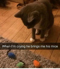 Best Friend, Cats, and Crying: When I'm crying he brings me his mice Cats are everyones best friend
