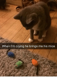 Crying, Mice, and Iam: When I'm crying he brings me his mice when iam crying he bring me his mice..