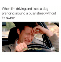 Right in the feels. (@memesodope): When I'm driving and I see a dog  prancing around a busy street without  its owner  Memesodope  ISOBSINTERNALLY Right in the feels. (@memesodope)