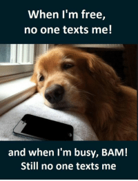 im free: When I'm free  no one texts me!  and when I'm busy, BAM!  Still no one texts me