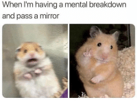 Dank, Mirror, and Breakdown: When I'm having a mental breakdown  and pass a mirror