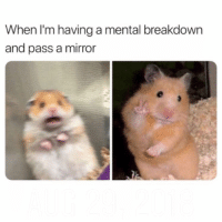 Mirror, Breakdown, and Mental Breakdown: When I'm having a mental breakdown  and pass a mirror