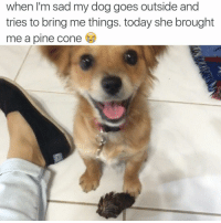 You know you're a fantastic owner when your dog loves you like this 💕🐶 Twitter handle: melaniewang2: when I'm sad my dog goes outside and  tries to bring methings. today she brought  me a pine Cone You know you're a fantastic owner when your dog loves you like this 💕🐶 Twitter handle: melaniewang2