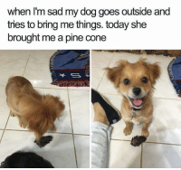 Such a good little buddy | @cuteandfuzzybunch 🐶: when I'm sad my dog goes outside and  tries to bring me things. today she  brought me a pine cone Such a good little buddy | @cuteandfuzzybunch 🐶