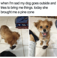 Follow my other account @x__social_butterfly__x @x__social_butterfly__x @x__social_butterfly__x ❤️❤️❤️❤️❤️❤️❤️❤️: when I'm sad my dog goes outside and  tries to bring me things. today she  brought me a pine cone Follow my other account @x__social_butterfly__x @x__social_butterfly__x @x__social_butterfly__x ❤️❤️❤️❤️❤️❤️❤️❤️