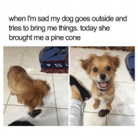 Memes, Animal, and Best: when I'm sad my dog goes outside and  tries to bring me things. today she  brought me a pine cone @teamnobadtimes provides the best animal memes 😭💯💕 I really needed to see this sweet face today 😍
