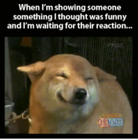 srsfunny:Waiting for my friend's reaction…: When I'm showing someone  something l thought was funny  and I'm waiting for their reaction... srsfunny:Waiting for my friend's reaction…