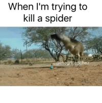 misunderstood spider: When I'm trying to  kill a spider  the grilledchez