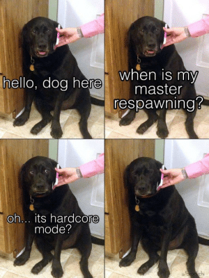 Goodbye my friend: when is my  master  respawning?  hello, dog here  oh... its hardcore  mode?  u/brockchi Goodbye my friend