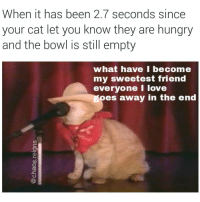 Hungry, Love, and Memes: When it has been 2.7 seconds since  your cat let you know they are hungry  and the bowl is still empty  what have l become  my sweetest friend  everyone I love  oes away in the end I focus on the pain. the only thing that's real (follow @chaos.reigns_) iknow thelyrics sayknow notlove pleaseletme havemyfun nineinchnails johnnycash hurt feedme