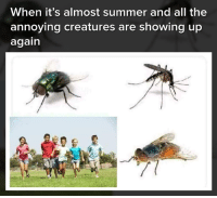 Memes, Summer, and All The: When it's almost summer and all the  annoying creatures are showing up  again