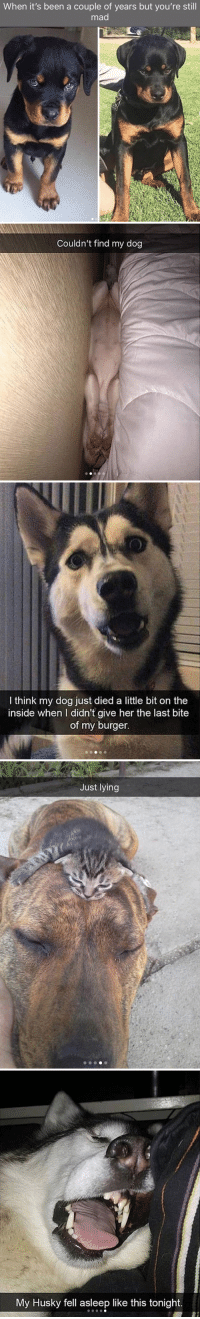 Target, Tumblr, and Animal: When it's been a couple of years but you're still  mad   Couldn't find my dog   I think my dog just died a little bit on the  inside when I didn't give her the last bite  of my burger.   Just lying   My Husky fell asleep like this tonight. babyanimalgifs:Animal snaps
