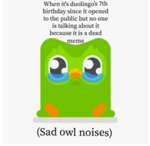 Sad owl noises: When it's duolingo's 7th  birthday since it opened  to the public but no one  is talking about it  because it is a dead  meme  (Sad owl noises) Sad owl noises