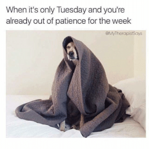 Dank, Patience, and 🤖: When it's only Tuesday and you're  already out of patience for the week  @MyTherapistSays