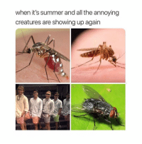 Memes, Summer, and Girl Memes: when it's summer and all the annoying  creatures are showing up again If you aren't following @memes.factss you might as well delete instagran ! 🤯🤯