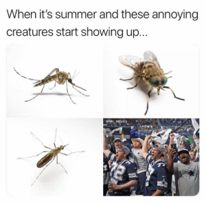 Showing Up: When it's summer and these annoying  creatures start showing up...  ONFL MEMES