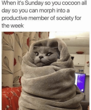 https://t.co/93MshMxkFR: When it's Sunday so you cocoon all  day so you can morph into a  productive member of society for  the week https://t.co/93MshMxkFR