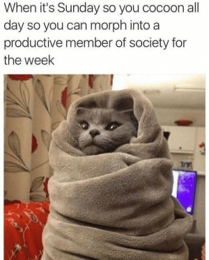 awesomacious:  Get back out there and do your best: When it's Sunday so you cocoon all  day so you can morph into a  productive member of society for  the week awesomacious:  Get back out there and do your best