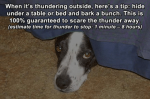 awesomesthesia:  Dog Life Hack: When it's thundering outside, here's a tip: hide  under a table or bed and barka bunch. This is  100% guaranteed to scare the thunder away.  (estimate time for thunder to stop: 1 minute-8 hours) awesomesthesia:  Dog Life Hack