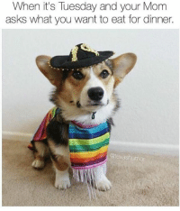 When It's Tuesday and Your Mom Asks What You Want to Eat ...