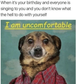 its your birthday: When it's your birthday and everyone is  singing to you and you don't know what  the hell to do with yourself  I am uncomfortable
