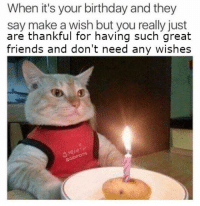Birthday, Friends, and Make A: When it's your birthday and they  say make a wish but you really just  are thankful for having such great  friends and don't need any wishes
