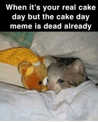 Let's get this cake: When it's your real cake  day but the cake day  meme is dead already Let's get this cake
