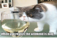 Memes, 🤖, and Weekend: When Jurealizethe weekend over-