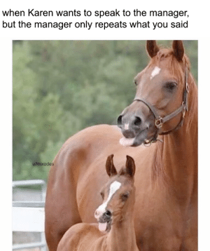 Dad, Dank, and Memes: when Karen wants to speak to the manager,  but the manager only repeats what you said  u/mixodes Thanks dad for supporting me by Mixodes MORE MEMES