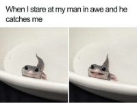 Http, Via, and Man: When l stare at my man in awe and he  catches me I like you via /r/wholesomememes http://bit.ly/2VQsdvw